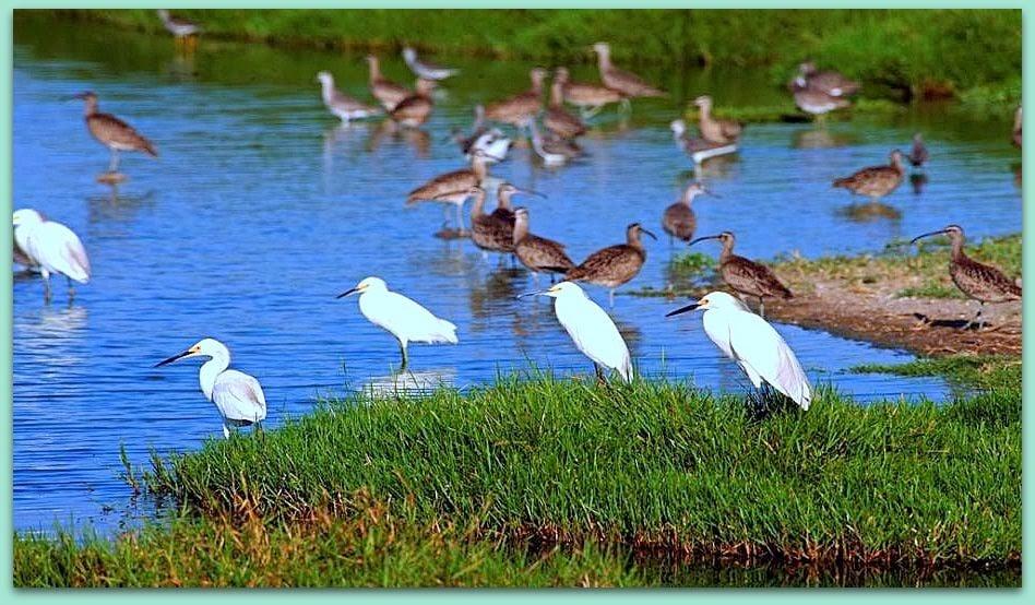 Especies de aves presentes en el ecosistema que generan los pantanos.