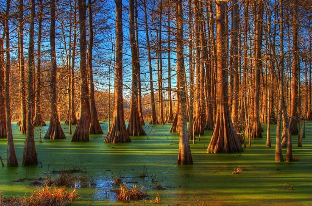 Pantano con vegetación de tipo árboles de grandes troncos.