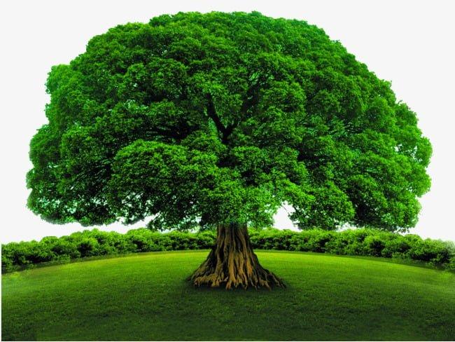 La Fotosíntesis generada por las plantas produce el ciclo del carbono